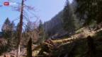 Video «Wild frisst Schutzwald» abspielen