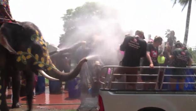 Video «Wasserschlacht zwischen Menschen und Elefanten» abspielen