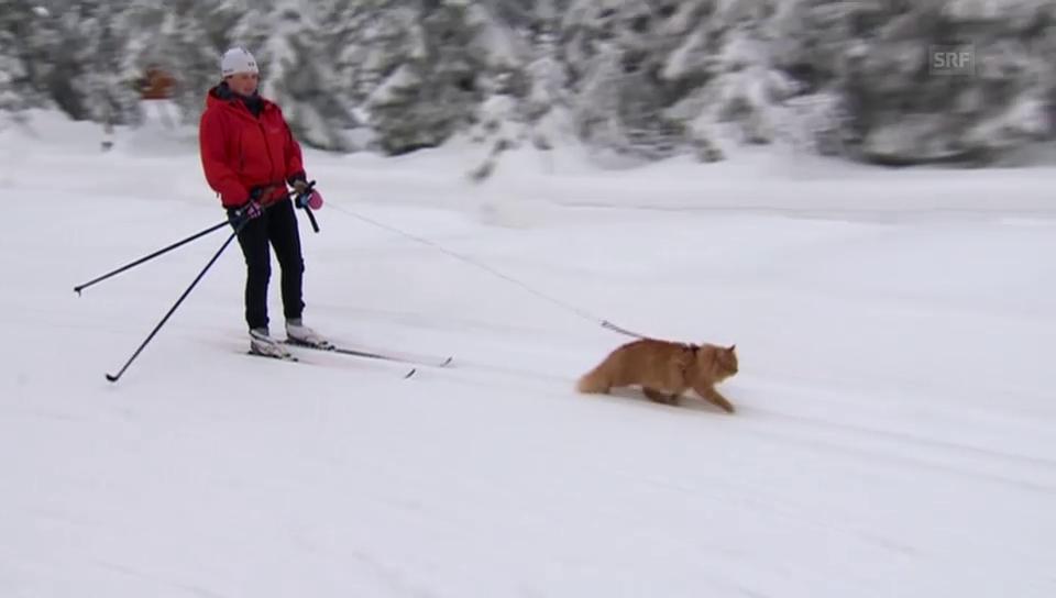 Jesper liebt Langlaufen