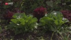 Video «Familiengärtner müssen Rasen anpflanzen» abspielen