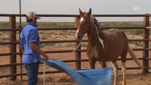 Video «Clayton zeigt, wie man ein Wildpferd zähmt.» abspielen