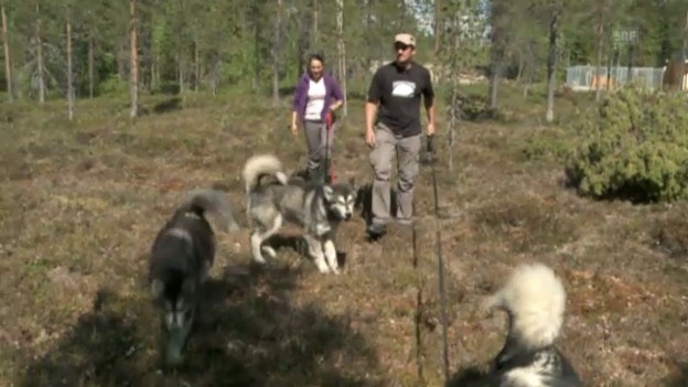 Video «Hunde-Teenager am Herumtollen» abspielen