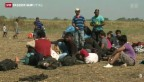 Video «Flüchtlingsstrom unweit Ungarn» abspielen