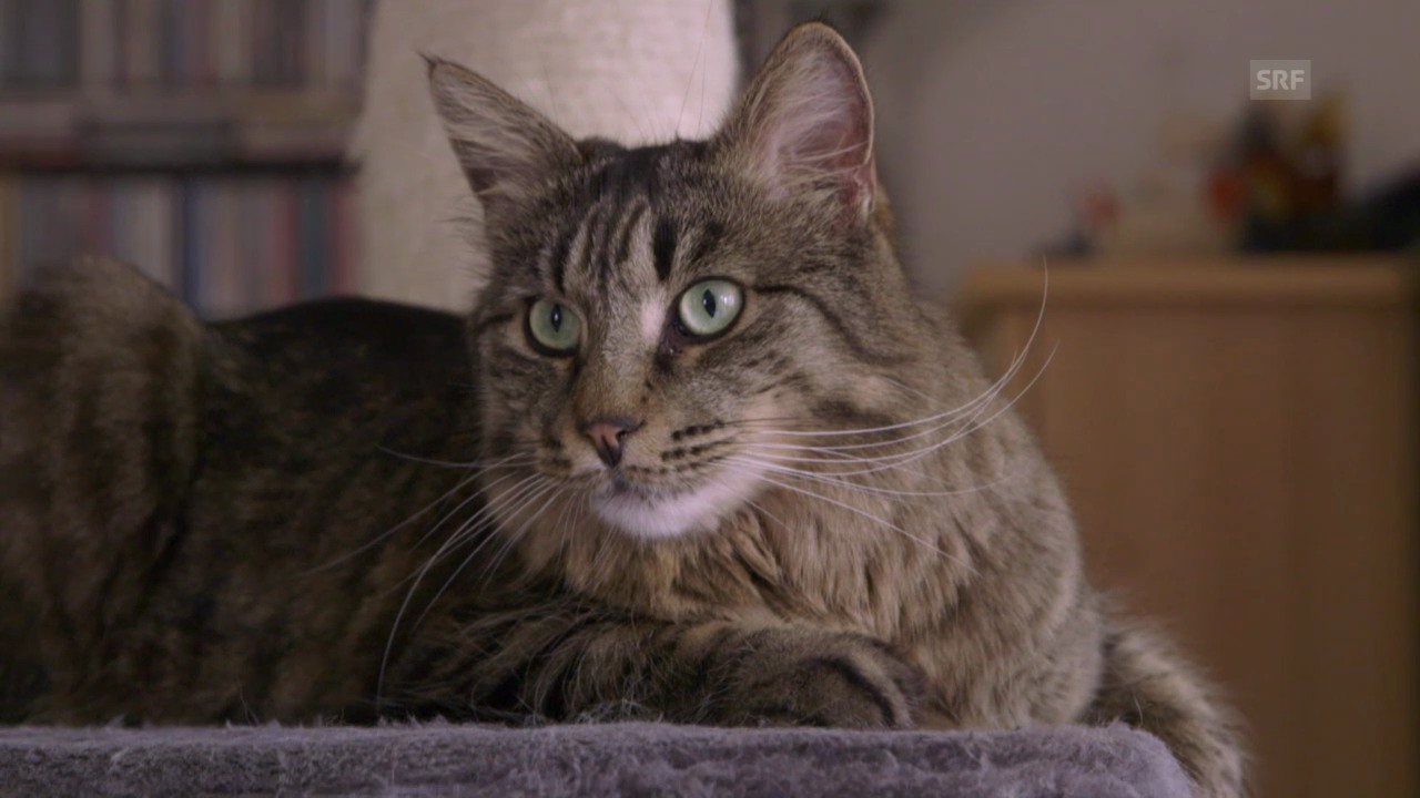 Vorschau «Tierische Freunde»: So werden Katzen stubenrein