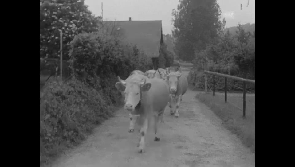 1. April 1967: Ungewöhnliche landwirtschaftliche Nutzfläche