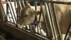 Video «Öffnung des Milchmarkts» abspielen