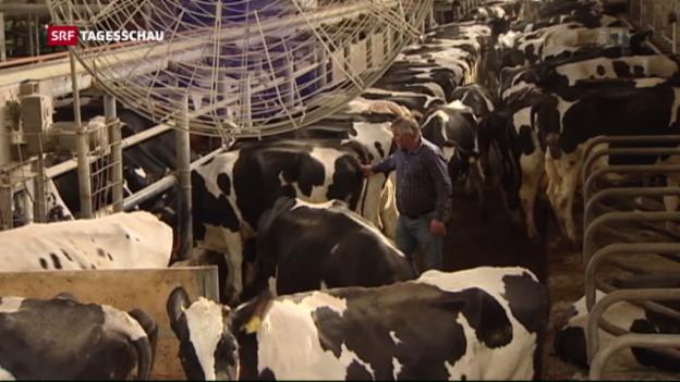Video «Staatliche Hilfe für Milchbauern in Deutschland» abspielen