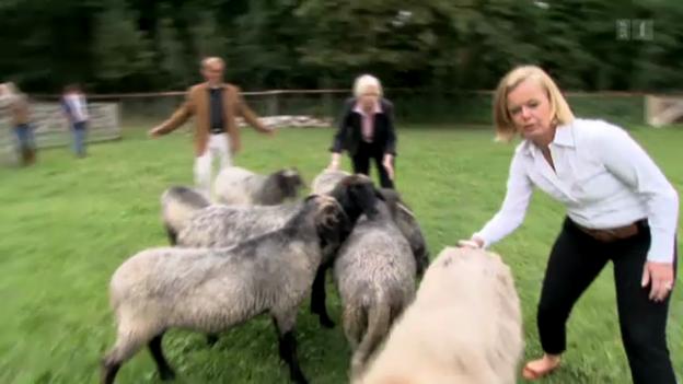 Video «Gewisse Tiere suchen Kontakt, andere nehmen Abstand.» abspielen