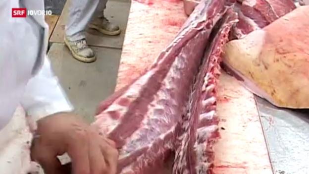 Video «Pferdefleisch in der Coop-Lasagne» abspielen