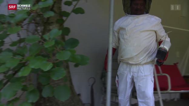 Video «Wespen-Alarm wegen Hitze» abspielen
