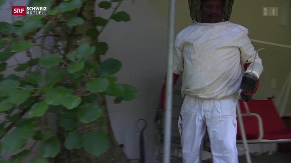 Wespen-Alarm wegen Hitze
