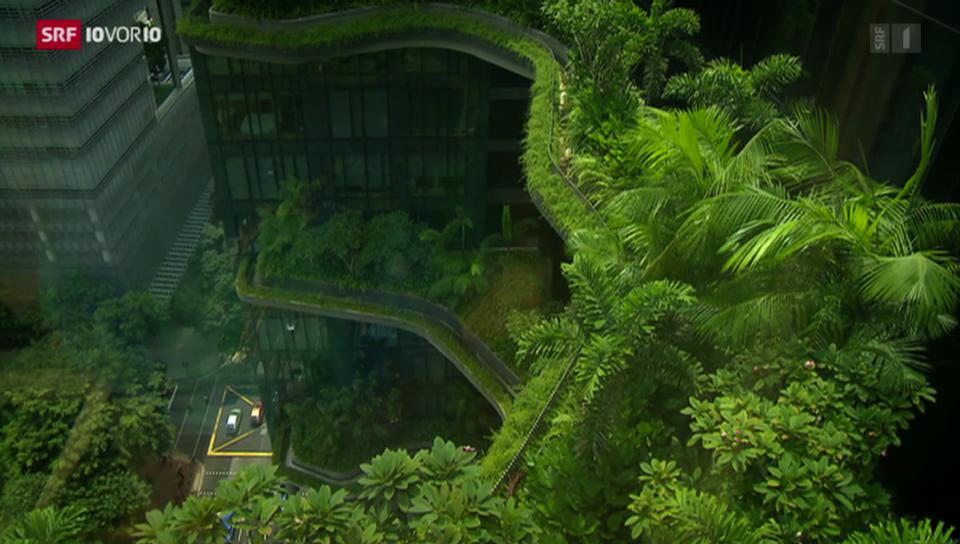 Die hängenden Gärten von Singapur