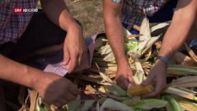 Video «FOKUS: Hitzenotstand in der Landwirtschaft» abspielen