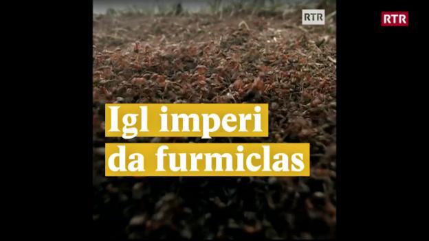 Laschar ir video «Igl imperi da furmiclas»