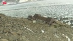 Video «Der Aletsch-Gletscher schwindet» abspielen