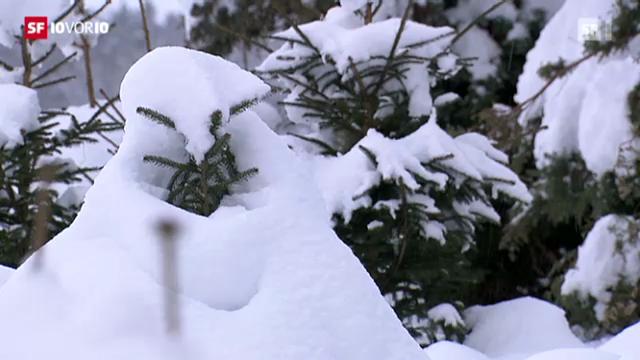Schnee bereitet Gärtnern Probleme