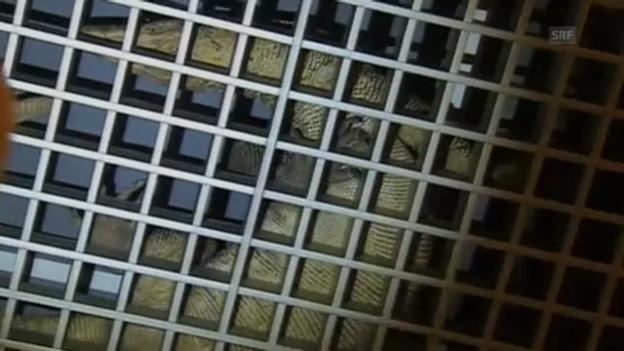 Video «Reptil im Parlament» abspielen