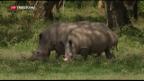 Video «China will Tigerknochen und Nashorn-Hörner wieder erlauben» abspielen