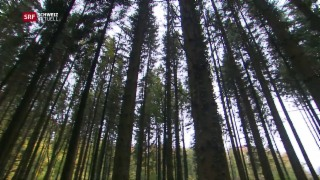 Video «16 Millionen Franken für den Wald» abspielen