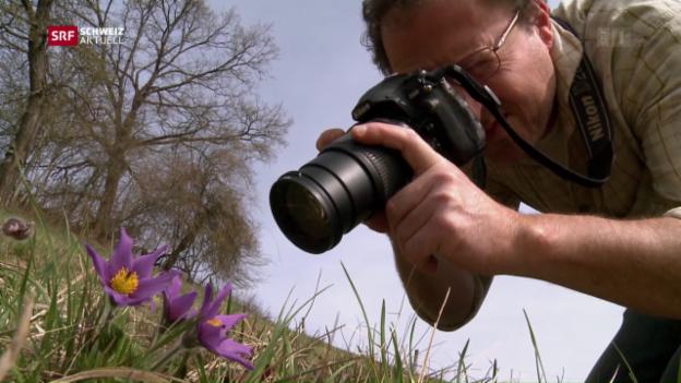 Video «Botanische Sensation im Aargau» abspielen