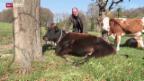 Video «Gnadenhof für Bauernhoftiere» abspielen