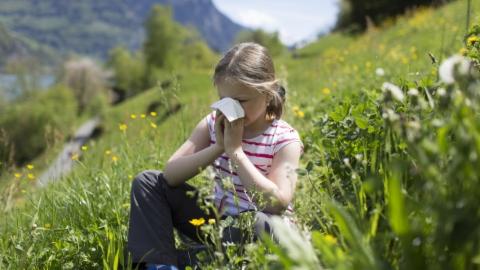 Künstliche Intelligenz hilft Pollen-Geplagten.