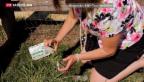 Video «Auf Hundekot-Spurensuche in London» abspielen