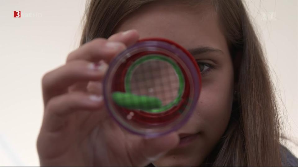 Schüler sammeln Daten für die Wissenschaft