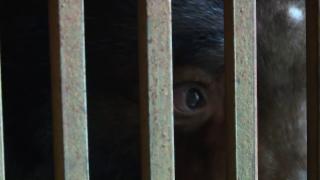 Video «Frau Büttikers Gespür für Tiere» abspielen