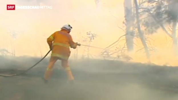 Video «Gravierende Buschbrände in Australien» abspielen