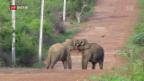 Video «Zwischen Menschen und Elefanten schlichten» abspielen