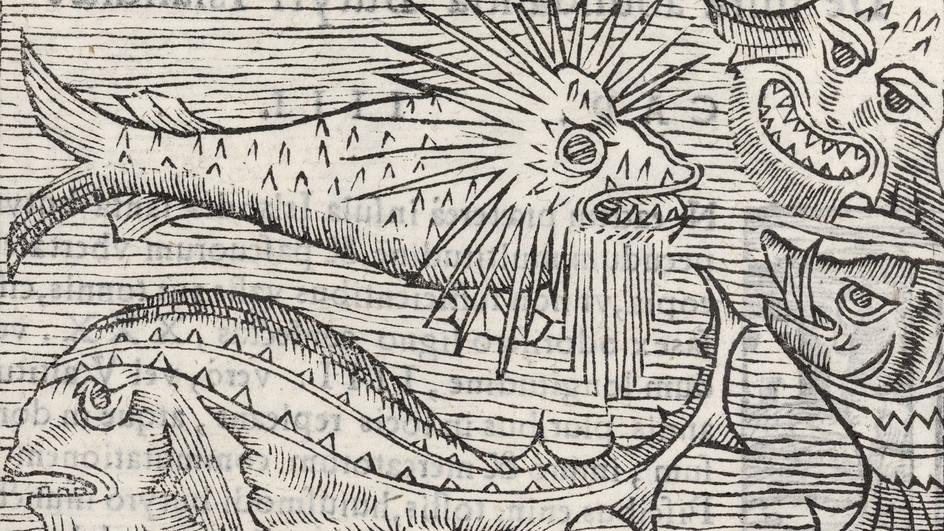 Sachbuch «Ungeheuerlich»: Monster aus dem Meer