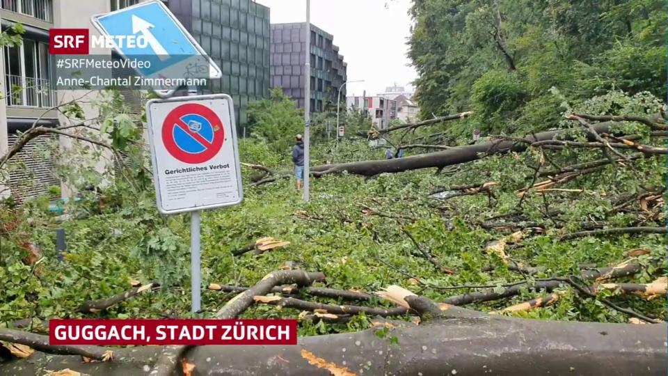 Ein nächtliches Gewitter fällte im Raum Zürich zahlreiche Bäume.