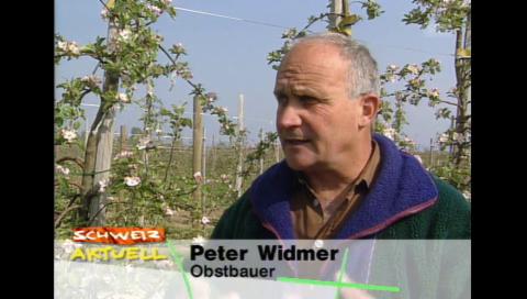 Fröstschäden 1997, Beitrag Schweiz Aktuell