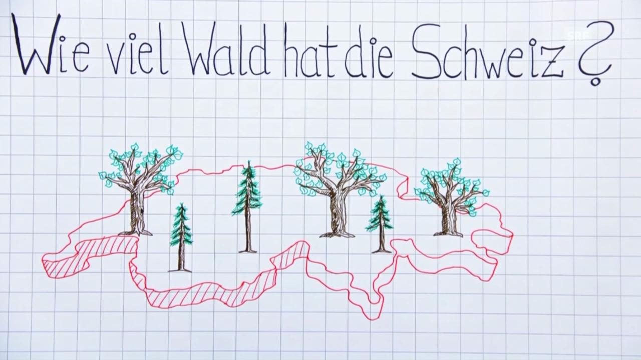 Wissenswertes zum Wald – Strich für Strich