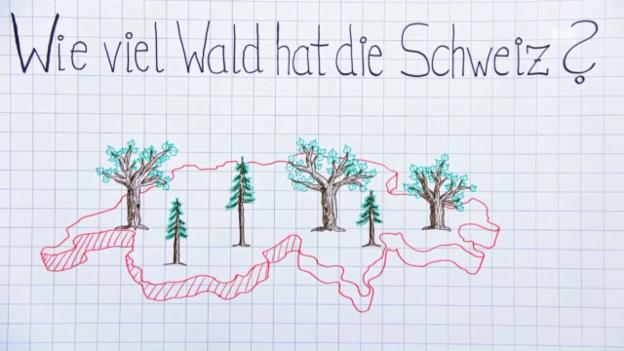 Video «Wissenswertes zum Wald – Strich für Strich» abspielen