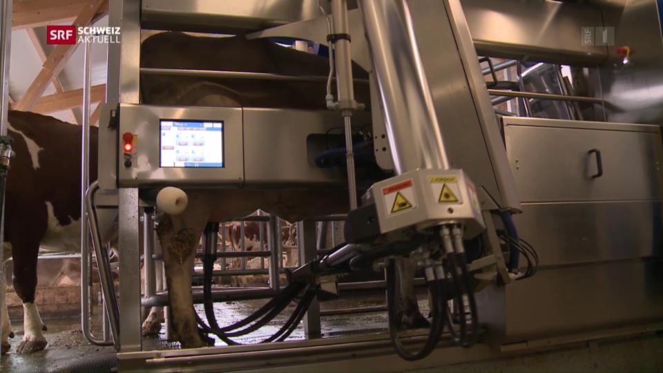 Roboter im Kuhstall