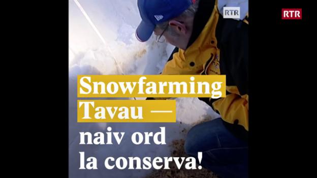 Laschar ir video «Snowfarming Tavau - naiv ord la conserva!»