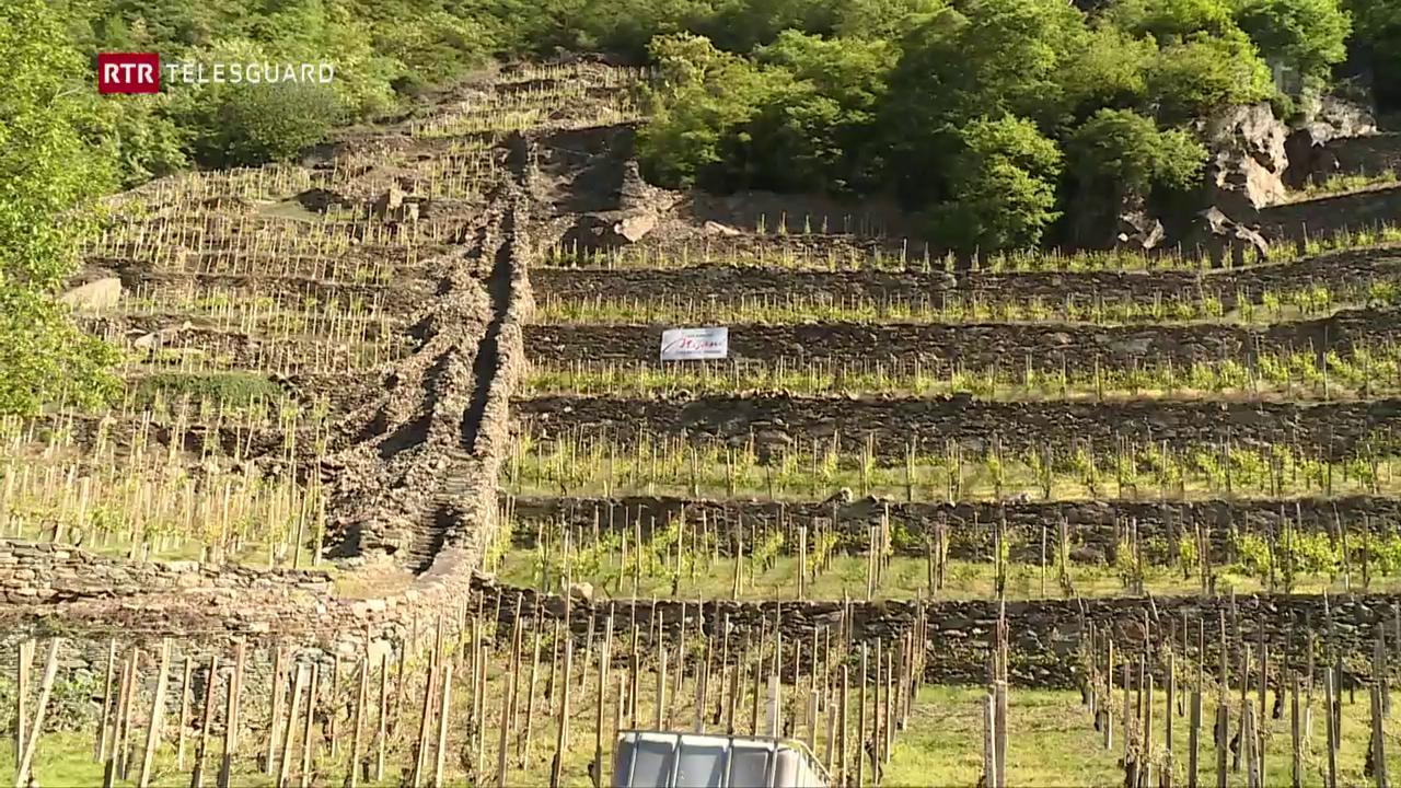 Grond donn per in viticultur da la Val Puschlav