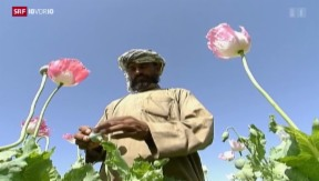 Video «Drogenland Afghanistan» abspielen