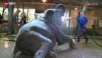 Video «Das Haus der Giganten» abspielen