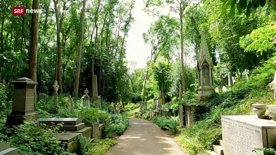 Bäume leben in Frieden auf dem Friedhof mitten in London