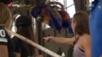 Video «Die Hochspringerinnen vor dem Weltklasse-Zürich-Event im HB» abspielen