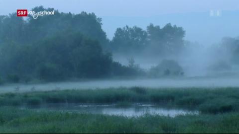 Natur am Rhein: Flussgeister (1/3)