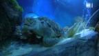 Video «Der Fischflüsterer: Dritter Teil» abspielen