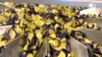 Video «Blue Chips aus dem Kartoffelacker» abspielen