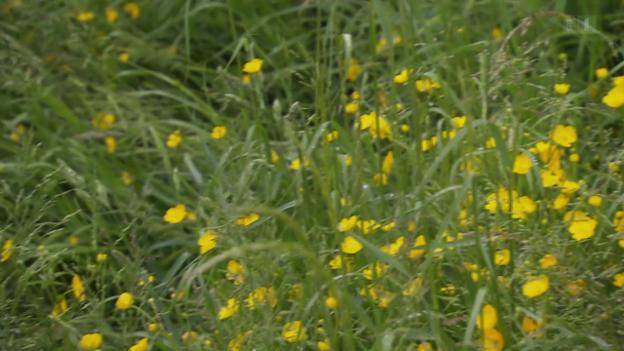 Video «Biologische Artenvielfalt bedroht: Wissenschaftler schlagen Alarm» abspielen