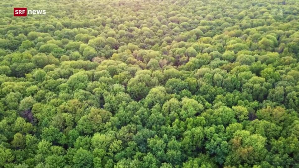 Die Bedeutung der Wälder