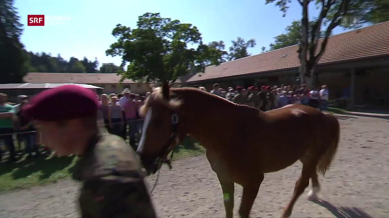 Die Pferde von Hefenhofen sind verkauft