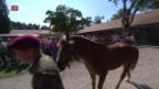 Video «Die Pferde von Hefenhofen sind verkauft» abspielen